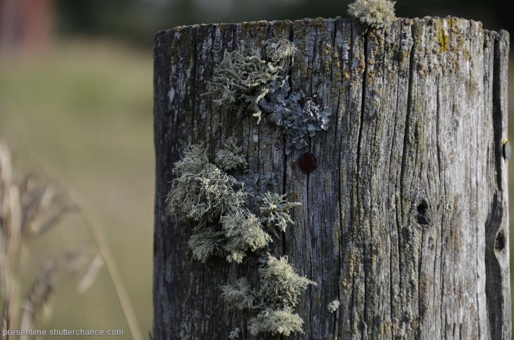 photoblog image Post and Lichen