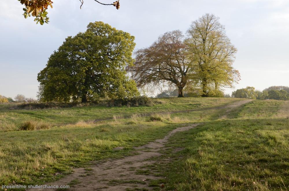 photoblog image Hampstead Heath